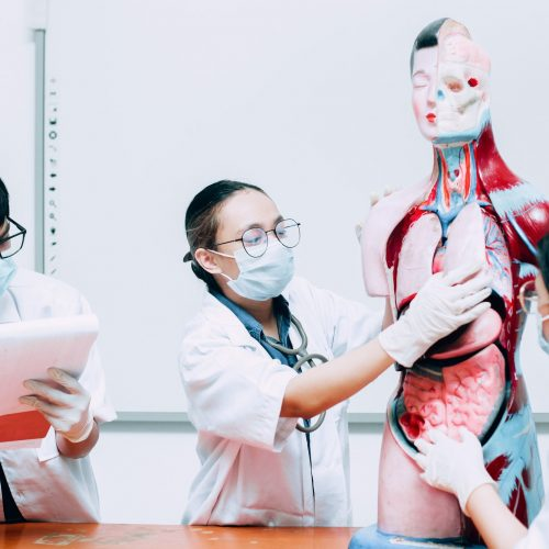 3 Medical Students Learning Human Body Part Model